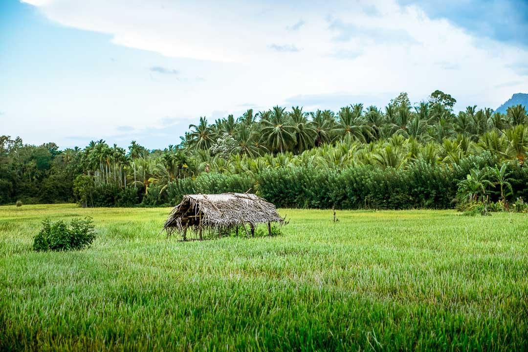 Jetwing Kaduruketha hotel Sri Lanka natuur rijstvelden