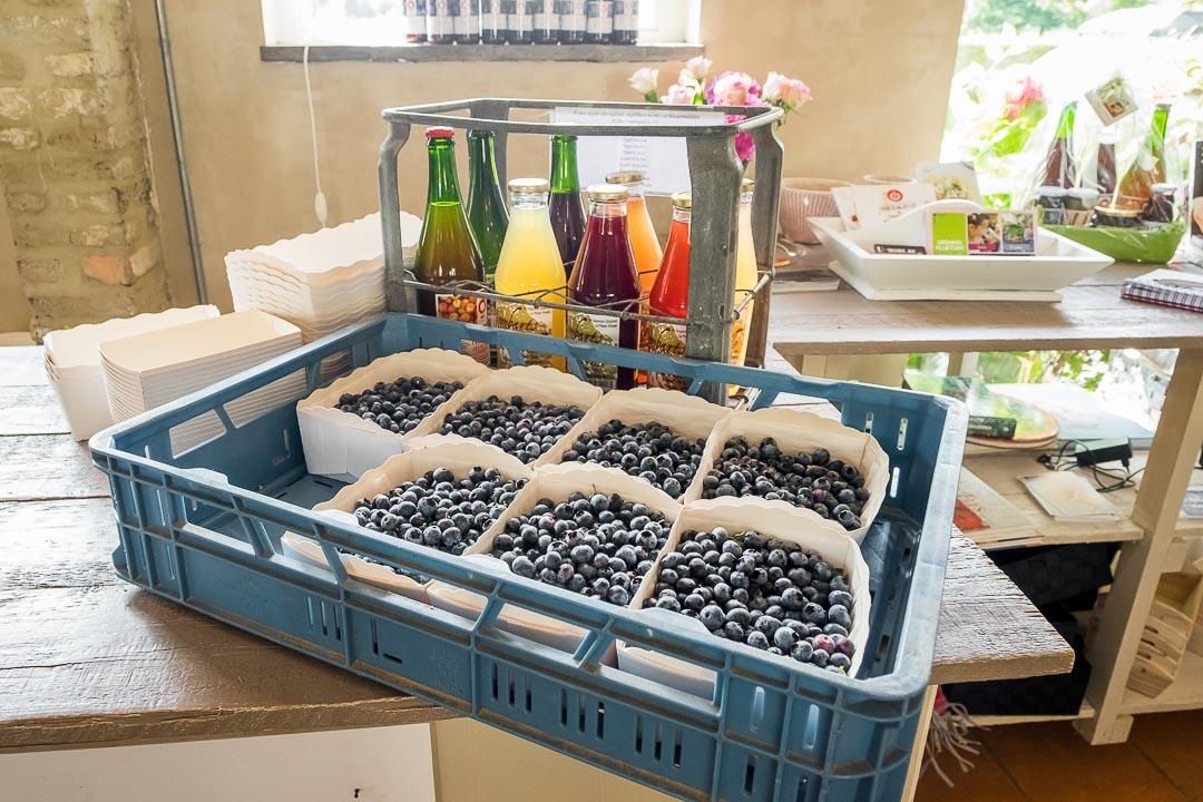 purfruit pluktuin oeselgem blauwe bessen geplukt