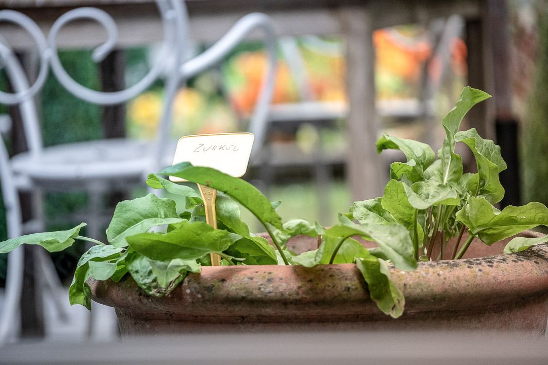 Garden herbs. Sorrel. Close-up. Auberge De Herborist by Hungry for More.