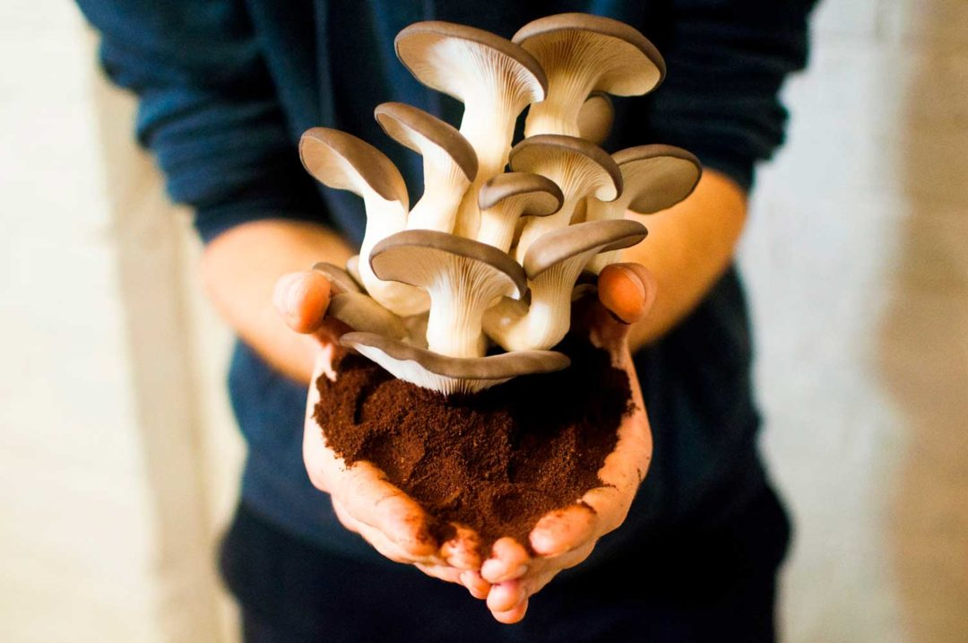 Tour & Taxis by Hungry for More. Close-up of someone who's holding the mushrooms in his hands.